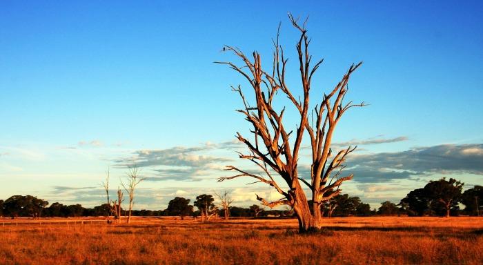 tree-392068_1280